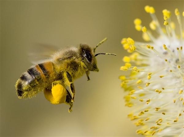 ミツバチネオニコチノイド農薬