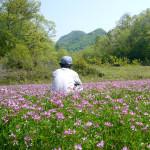 レンゲ畑(後ろ姿)