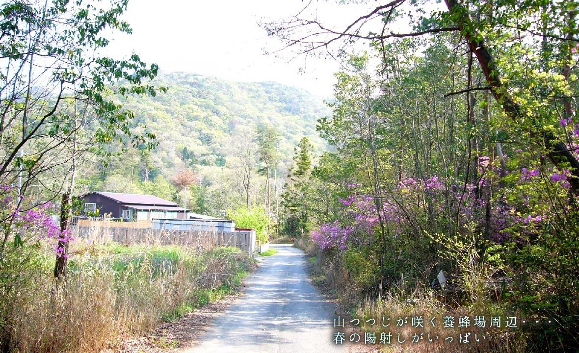 山つつじが咲く養蜂場周辺・・・春の陽射しがいっぱい